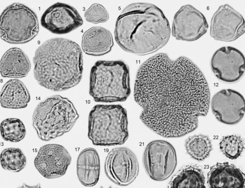 Miocene palynofloras of the Tınaz lignite mine, Muğla, southwest Anatolia: Taxonomy, palaeoecology and local vegetation change – 2017